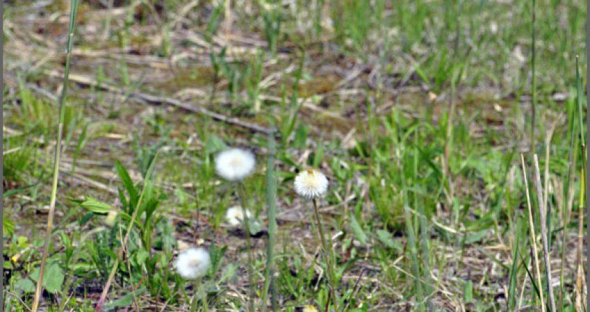 Laufgeschichten: Gummihopse & Knoblauchkrötenweitsprung