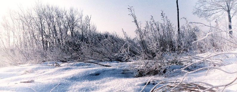 Berlin-Brandenburg-Wald-Kälte-Kristalle-Gräser-Winter