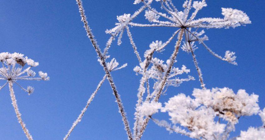 Trainingsgeschichten: Wintermorgen