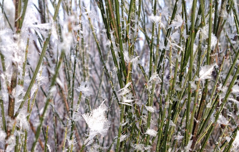 Winter-Berlin-Kälte-Kristalle