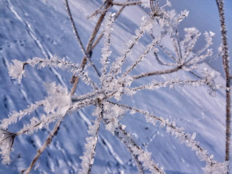 Winter-Berlin-Kälte-Schnee-Kristall