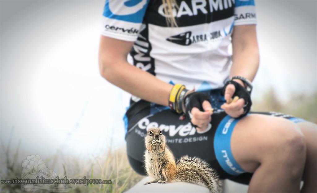 Streifenhörnchen Fuerteventura Erdmännchen
