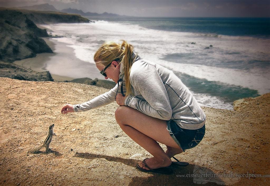 Streifenhörnchen Fuerteventura Strand Beach Surf