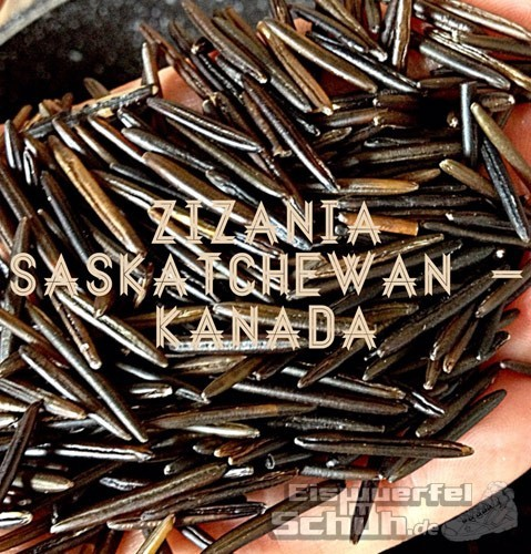 Reishunger-Reis-Kanada-Zizania-Saskatchewan