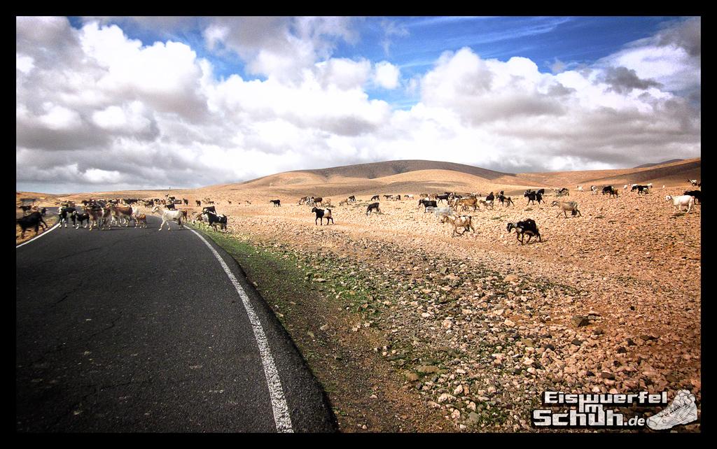Eiswuerfelimschuh Fuerteventura mit dem Rad II Garmin Rennrad (18)