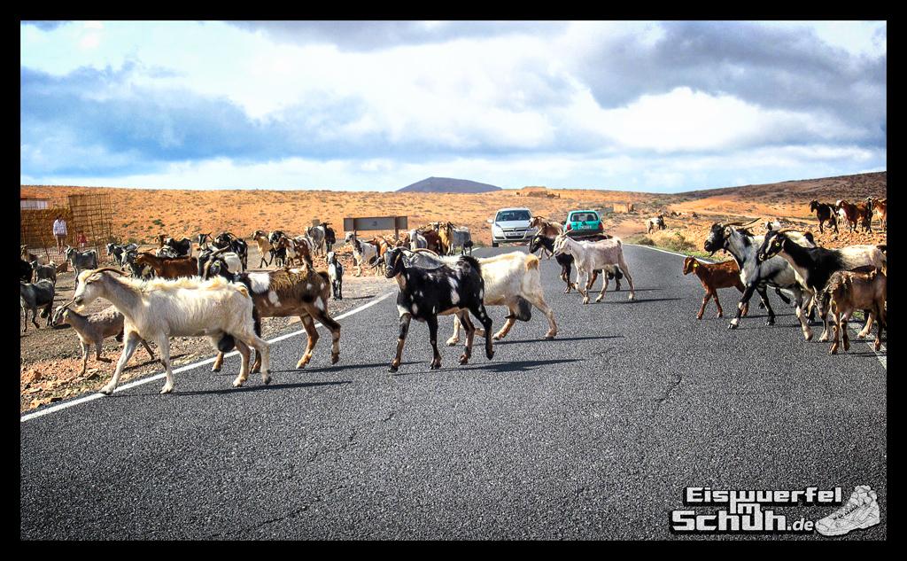Eiswuerfelimschuh Fuerteventura mit dem Rad II Garmin Rennrad (19)
