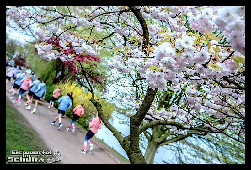 EISWUERFELIMSCHUH – NIKE FREE Hamburg Running Laufen (171)