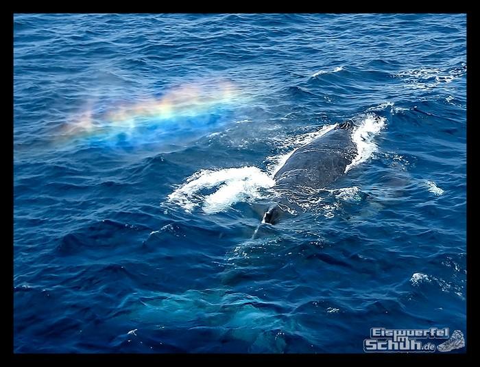 EISWUERFELIMSCHUH – Hawaii Oahu Reise Insel Erlebnisse (8)