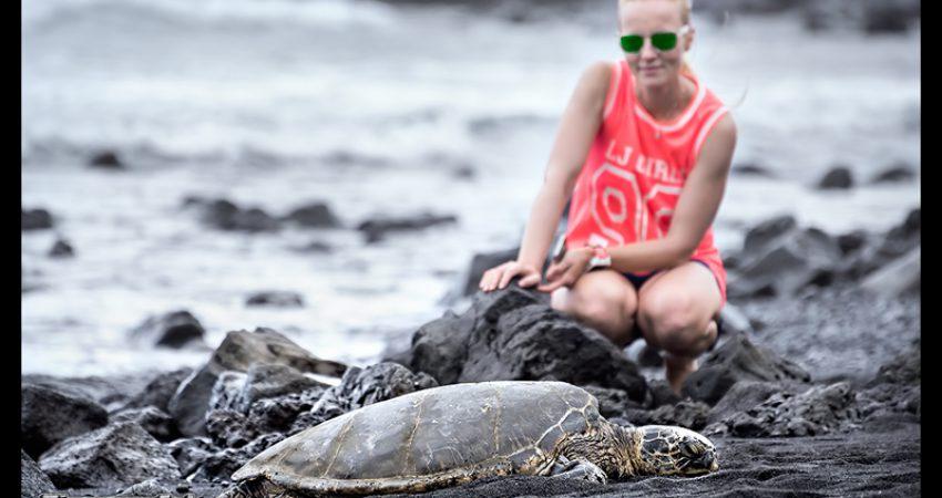Hawaii – Big Island: Punaluu Black Sand Beach – von Vergänglichkeit, Schildkröten und Kokosnüssen