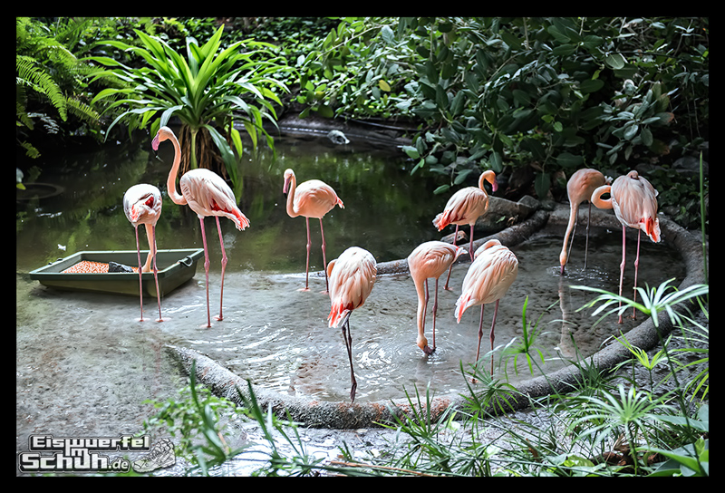 EISWUERFELIMSCHUH – Lauf Tropen Tropical Islands 2015 (82)
