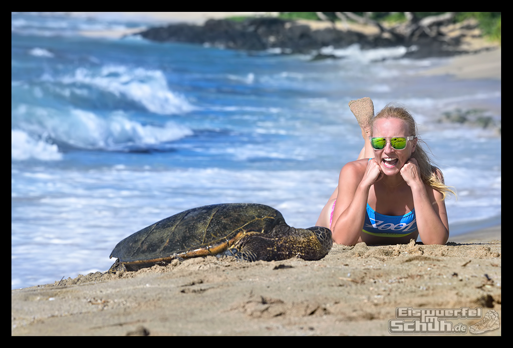 EISWUERFELIMSCHUH - Montagsglück Hawaii Schildkröte Strand