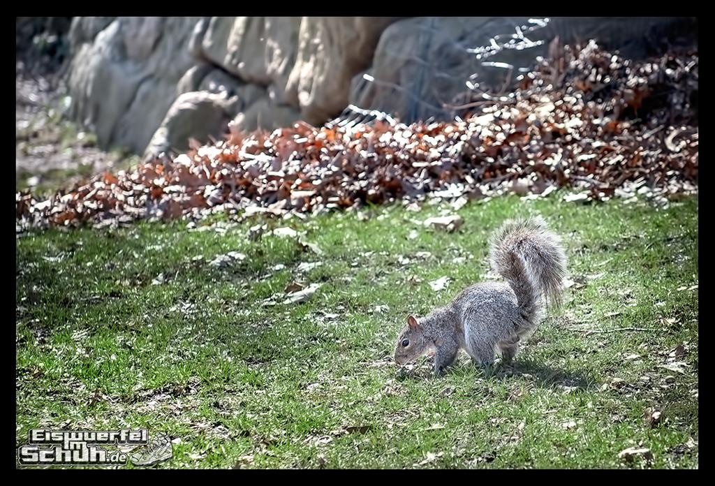 EISWUERFELIMSCHUH – Laufen Im Central Park Von New York (27)