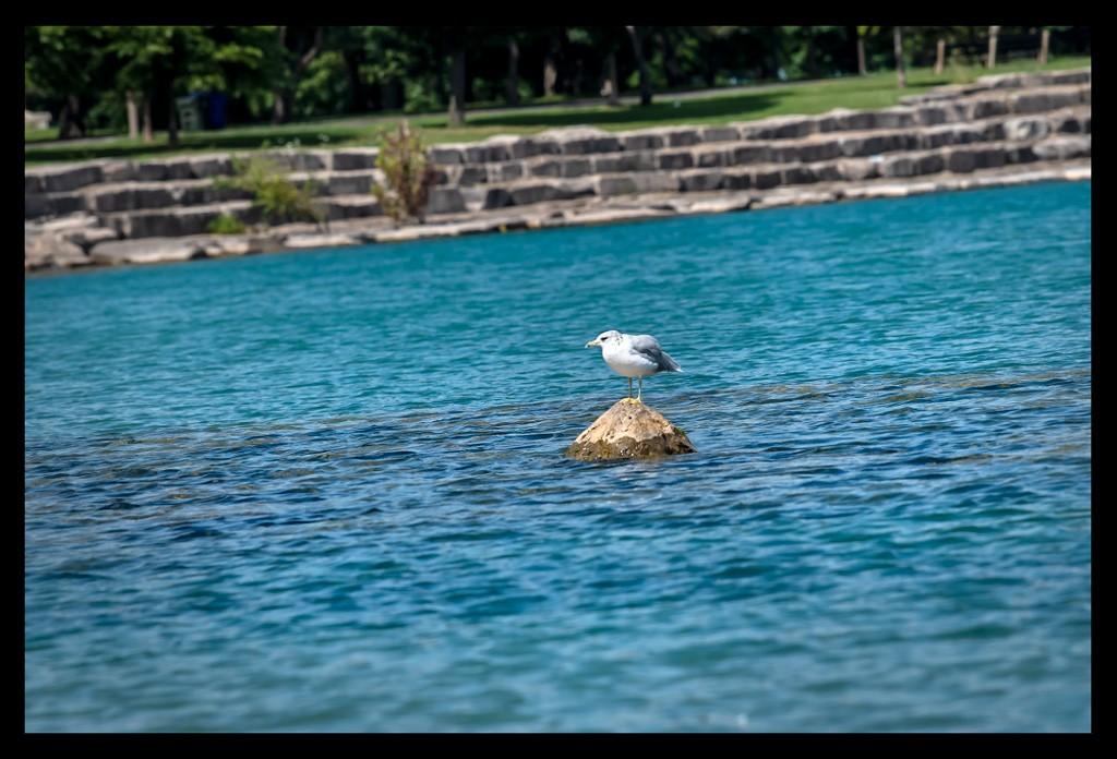Möwe im Wasser im See