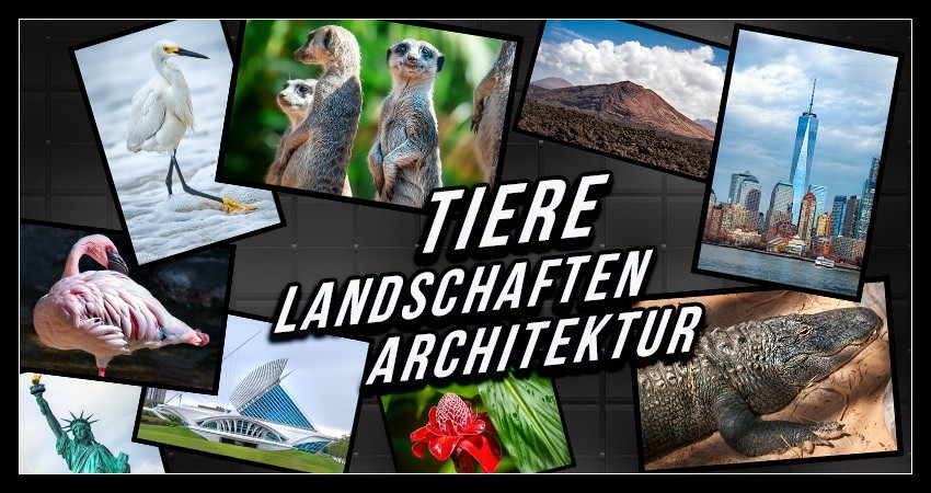 Tier-, Landschafts-, Architekturfotografie